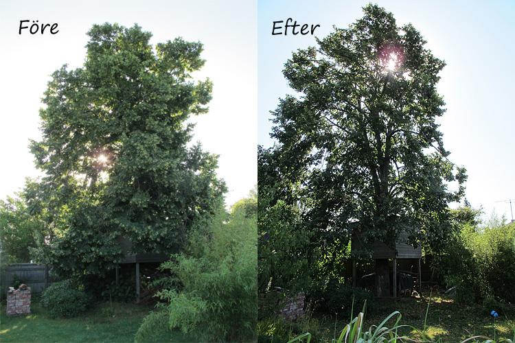 Arborister på besök före och efter.