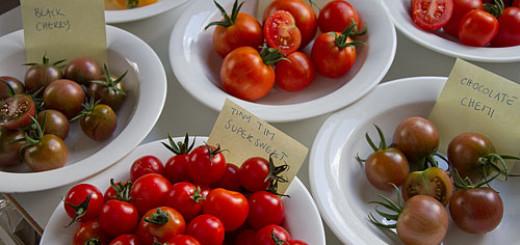 Tomatprovning