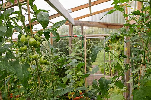 I grannens växthus