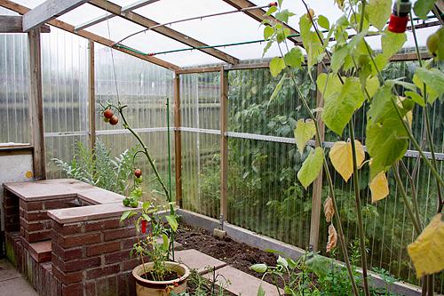Oj vilken skillnad från i somras när grannens växthus huserade ett 20-tal tomatplantor, 5 paprikaplantor, physsalisplantor mm