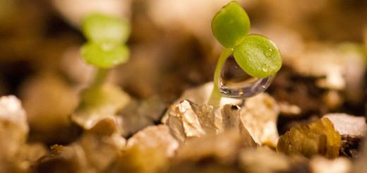 Frösådd har kommit upp vermiculite