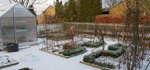 Köksträdgården i snö