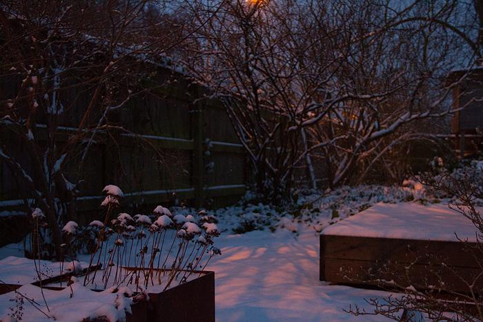 Singelträdgården snö_1