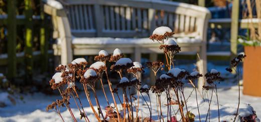 Snö och sol_singelträdgården