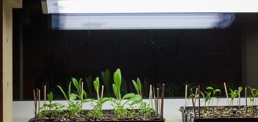Växtbelysning kronärtskocka chilli verbena penseer