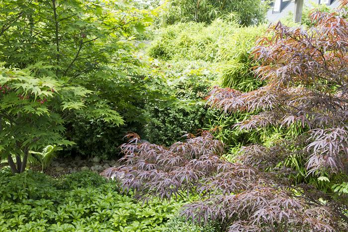 Skanby trädgård-1