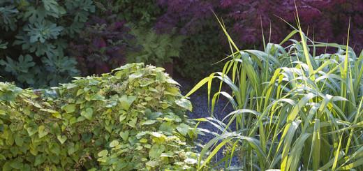 Singelträdgår humle elefantgräs lönn fikon
