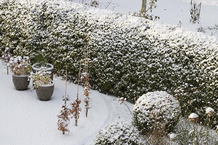 Första snön sol-1