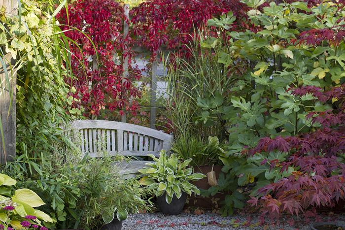 Trädgårdens vackraste - höst2 (1 of 1)
