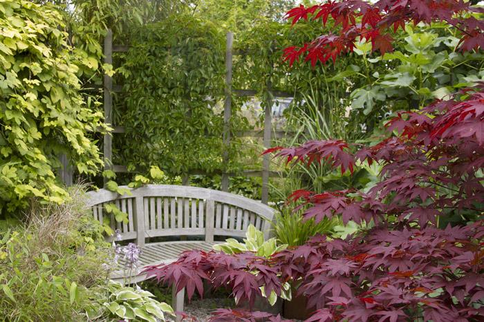 Trädgårdens vackraste - sommar_2 (1 of 1)