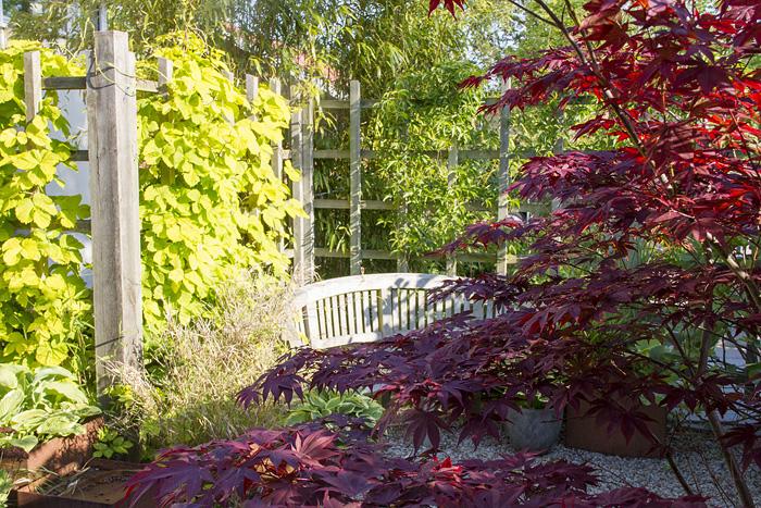 Trädgårdens vackraste - vår (1 of 1)